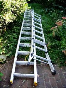 ladders in backyard